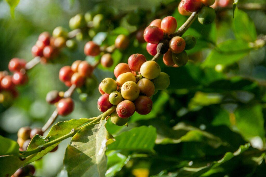 What's the Difference Between Single Origin and Blend Coffee?